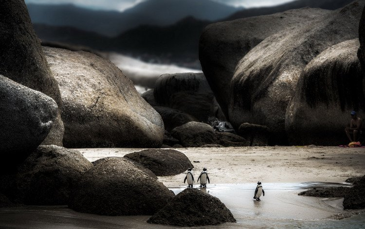 nature, background, people, watching, penguins