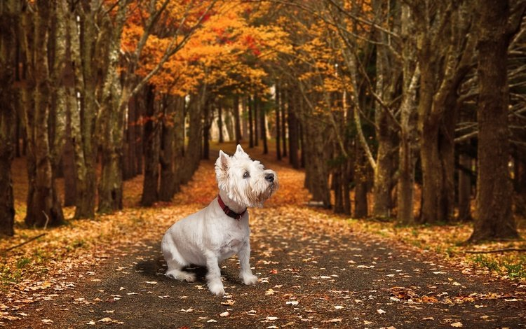 road, autumn, dog, each
