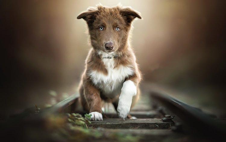 road, dog, puppy