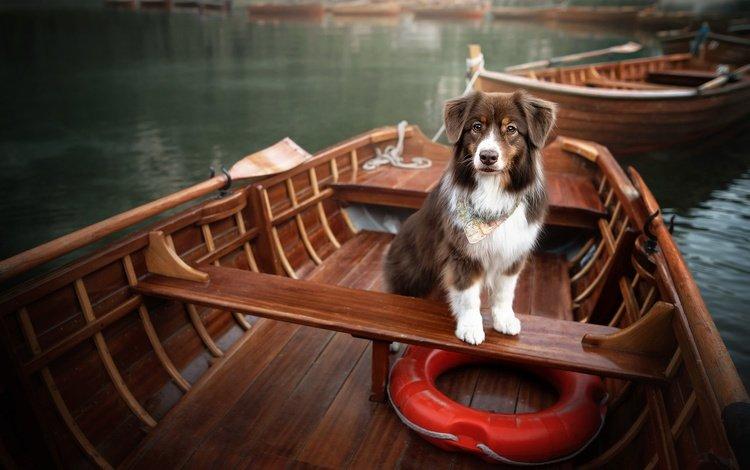 lake, boats, dog, lifeline