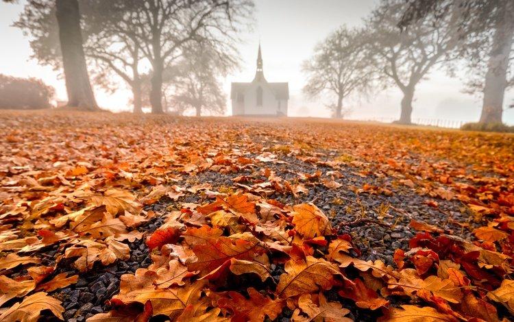 nature, leaves, autumn
