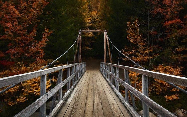 река, природа, лес, мост, осень, river, nature, forest, bridge, autumn
