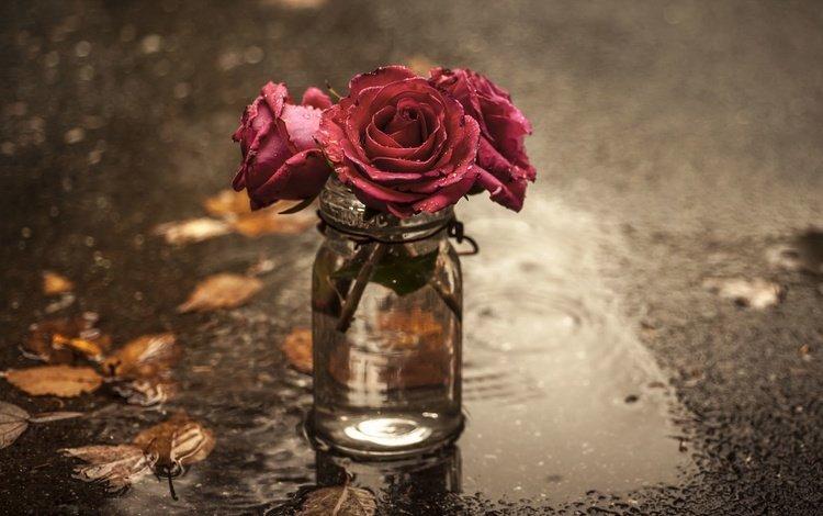 цветы, розы, лужа, банка, flowers, roses, puddle, bank