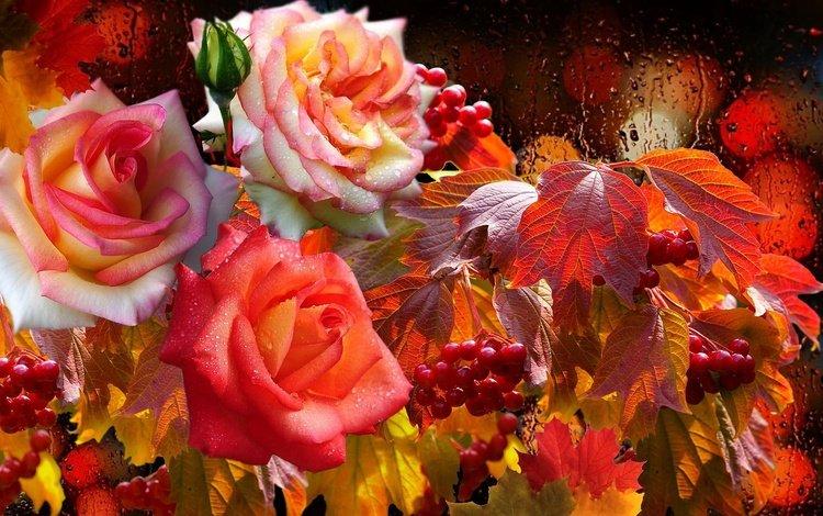 капли, розы, дождь, огоньки, калина, drops, roses, rain, lights, kalina