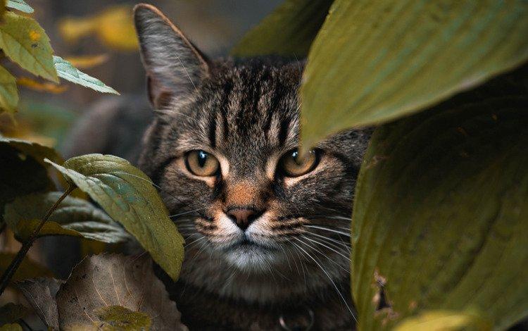 размытие, морда, домашнее животное, листья, скрываемся, макро, животные, кошка, взгляд, животное, кошки, blur, face, pet, leaves, hide, macro, animals, cat, look, animal, cats