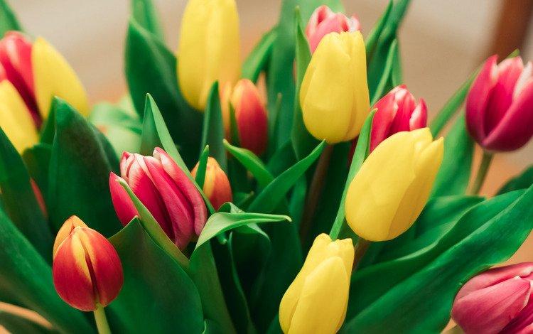 цветы, букет, тюльпаны, красива, flowers, bouquet, tulips, beautiful