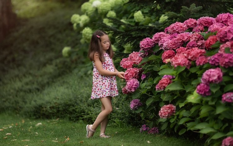 flowers, nature, the bushes, summer, girl, hydrangea