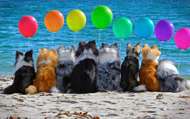 balls, mood, sea, sand, beach, colorful, air, company, dogs