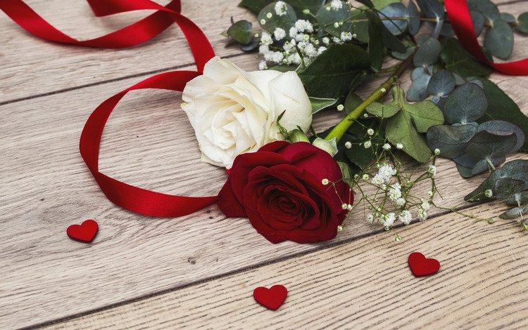flowers, roses, love, hearts, romantic, valentine