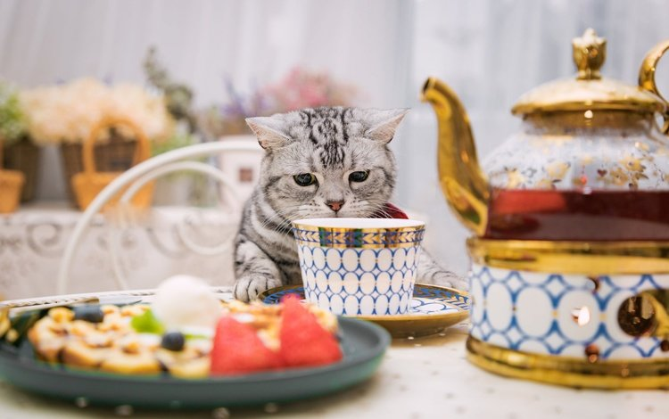 кошка, стол, сидит, чашка, нюхает, cat, table, sitting, cup, sniffing