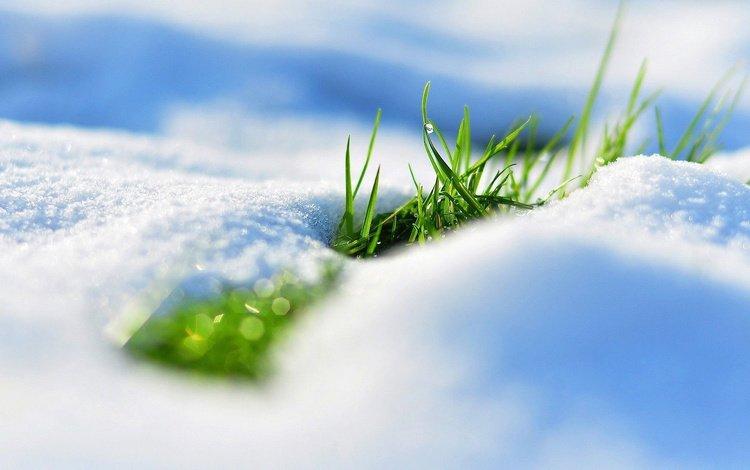 весна, травка, первая, spring, weed, first