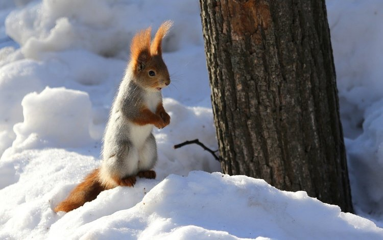 snow, nature, tree, winter, animal, trunk, protein, rodent