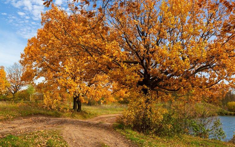 trees, nature, landscape, autumn