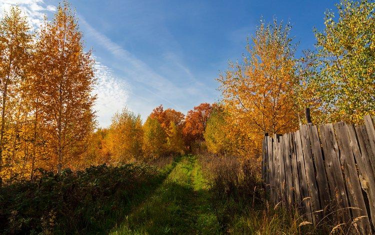 деревья, пейзаж, осень, забор, trees, landscape, autumn, the fence