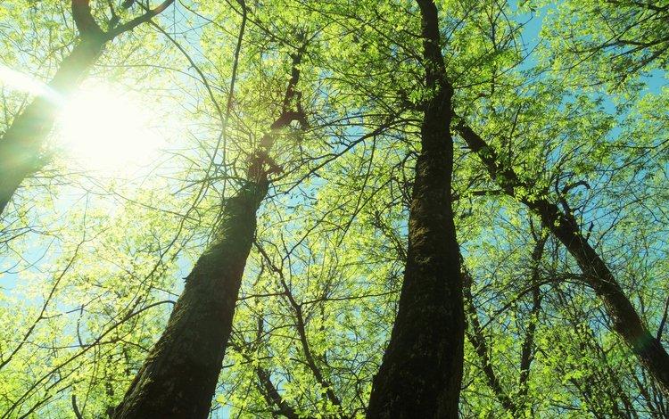 деревья, trees