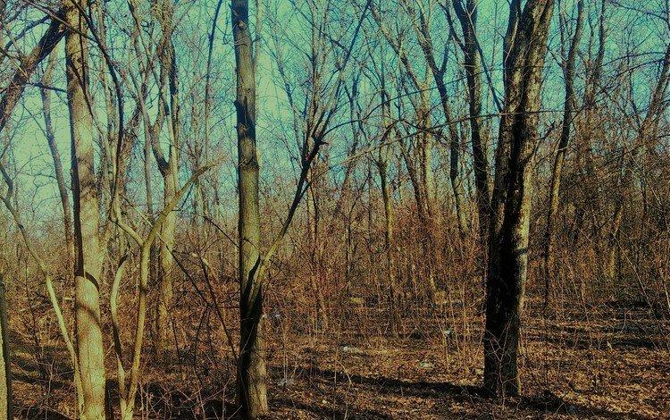 деревья, лес, trees, forest