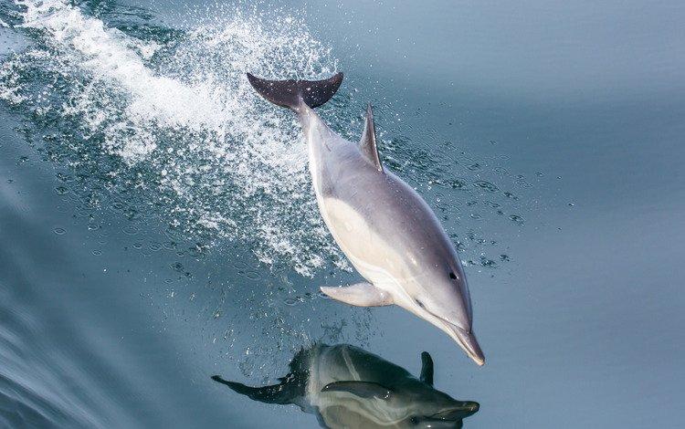 вода, отражение, море, брызги, прыжок, дельфин, water, reflection, sea, squirt, jump, dolphin