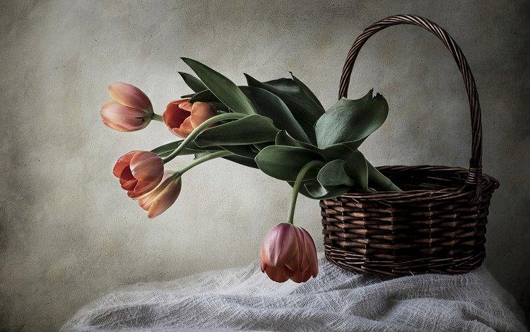 style, basket, tulips