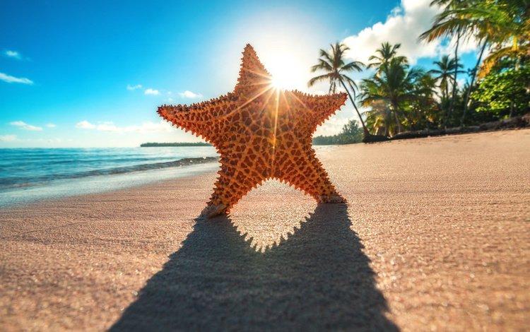 the sun, shore, rays, star, palm trees, shadow, the ocean, tropics
