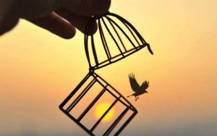 the sun, sunset, bird, freedom, cell