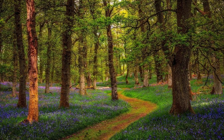 flowers, trees, nature, forest, park, path, scotland