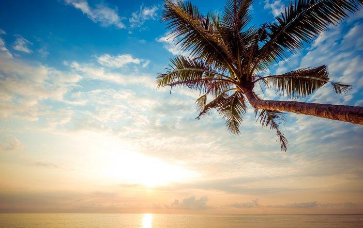 небо, лето, облака, пальма, берег, волны, закат, море, песок, пляж, the sky, summer, clouds, palma, shore, wave, sunset, sea, sand, beach