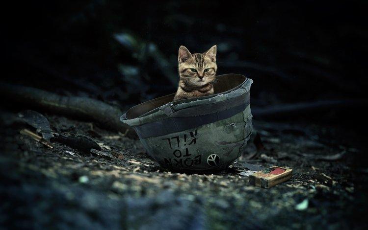 кот, кошка, шлем, cat, helmet