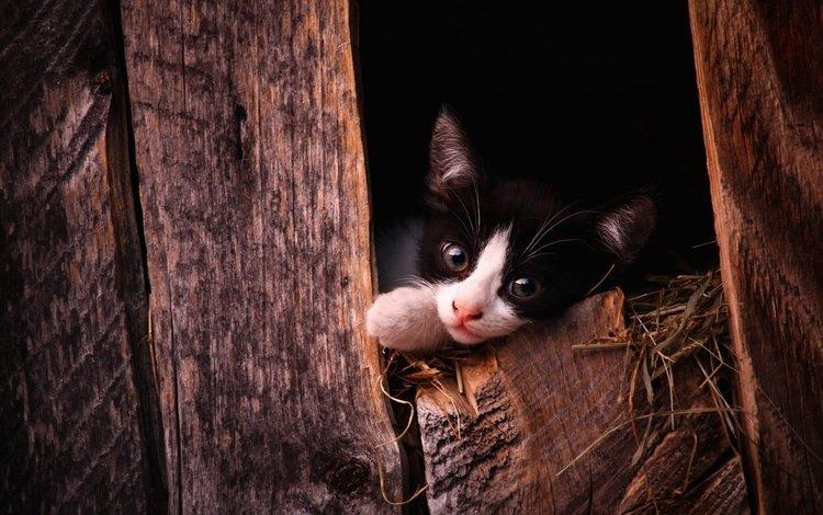 кот, мордочка, кошка, взгляд, котенок, cat, muzzle, look, kitty