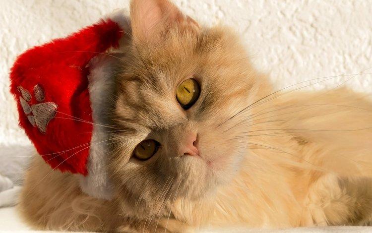 кот, мордочка, кошка, взгляд, cat, muzzle, look