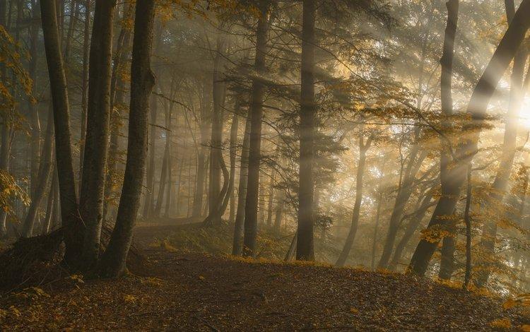 trees, sunrise, nature, forest, leaves, landscape, the sun's rays, sunlight, norbert maier