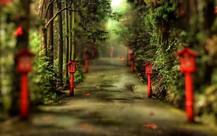 деревья, фонари, природа, парк, аллея, trees, lights, nature, park, alley
