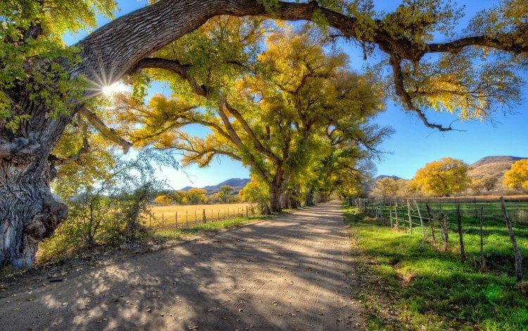 дорога, деревья, осень, забор, road, trees, autumn, the fence