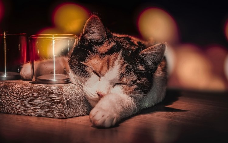 кот, кошка, сон, животное, стаканы, боке, cat, sleep, animal, glasses, bokeh