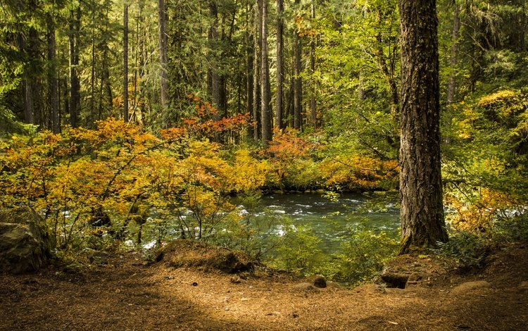 trees, water, river, nature, tree, forest, leaves, landscape, autumn