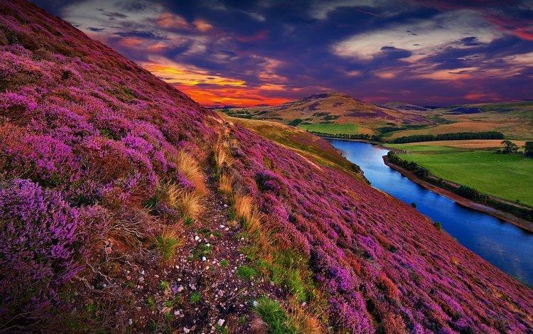 flowers, grass, clouds, trees, water, river, hills, nature, sunset, landscape, uk, scotland, heather, pentland hills