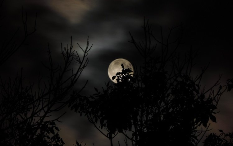 the sky, clouds, branch, nature, leaves, the moon, silhouette, darkness, twilight, dark