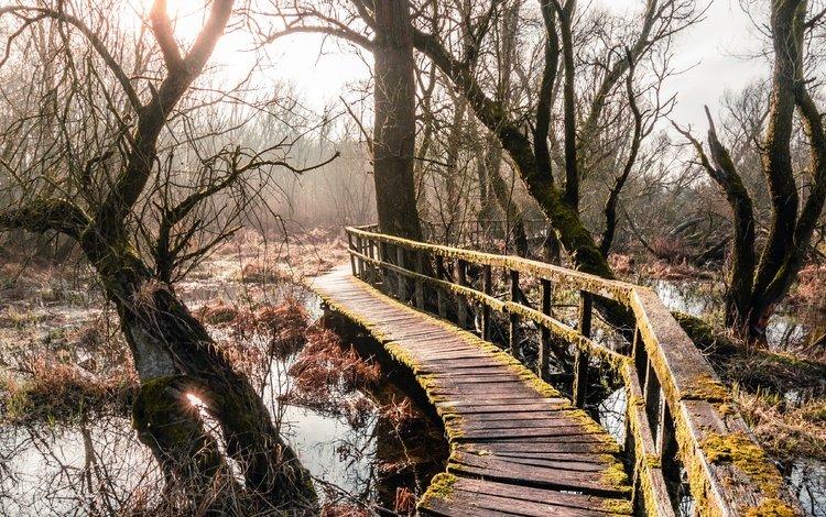 небо, мост, деревья, мох, вода, растительность, река, деревянный мост, природа, лес, пейзаж, ветви, the sky, bridge, trees, moss, water, vegetation, river, wooden bridge, nature, forest, landscape, branch