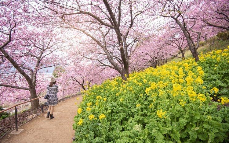 цветы, цветение, девушка, пейзаж, парк, япония, весна, сакура, flowers, flowering, girl, landscape, park, japan, spring, sakura