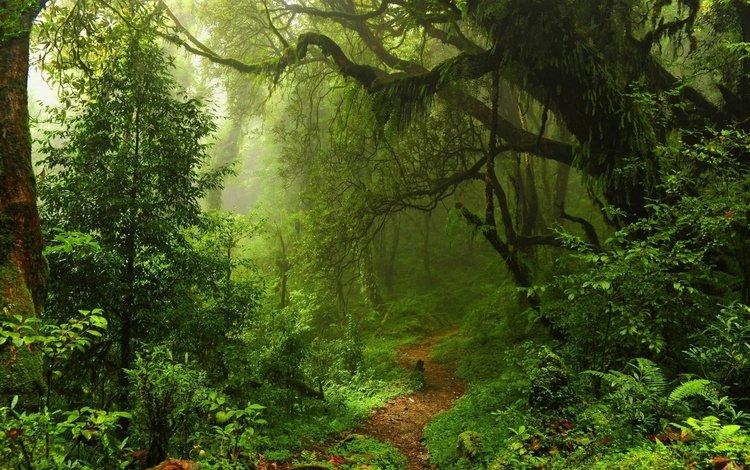 деревья, природа, лес, пейзаж, туман, тропинка, заросли, trees, nature, forest, landscape, fog, path, thickets