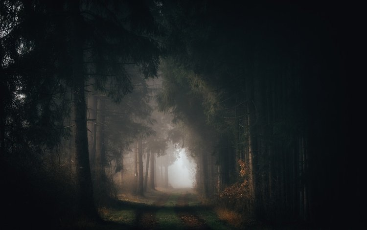 road, trees, nature, forest