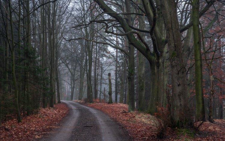 дорога, деревья, природа, лес, листья, осень, road, trees, nature, forest, leaves, autumn