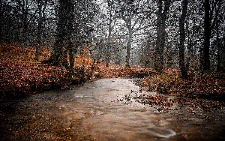 river, forest, stream, autumn