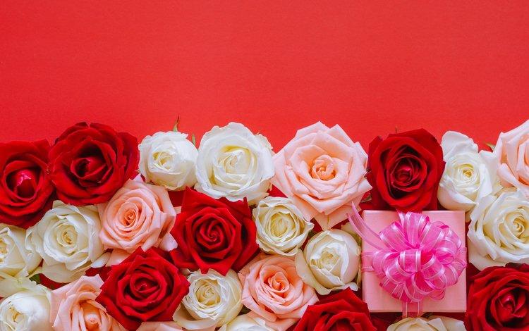 бутоны, розы, подарок, день рождения, buds, roses, gift, birthday