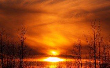 деревья, солнце, желтый, закат