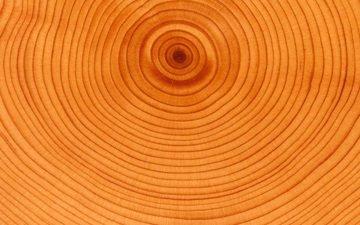tree, circles, age
