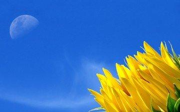 небо, желтый, цветок