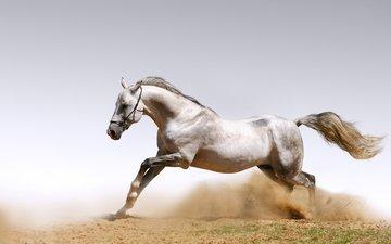 обои, животные, песок, лошади, кони, пыль, animals wallpapers, пылинки