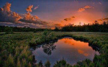 трава, вода, природа, дерево, закат, отражение, лужа