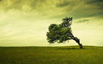 небо, трава, облака, дерево, поле