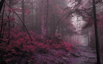дорога, лес, фиолетовый
